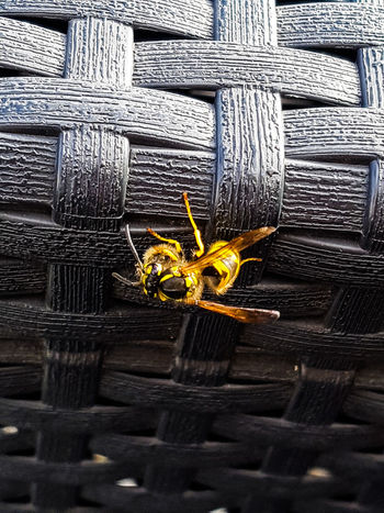 Wasp Wasp Eating Animal In Nature Insect Photography One Animal