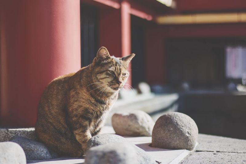 Cat sitting by stones on porch