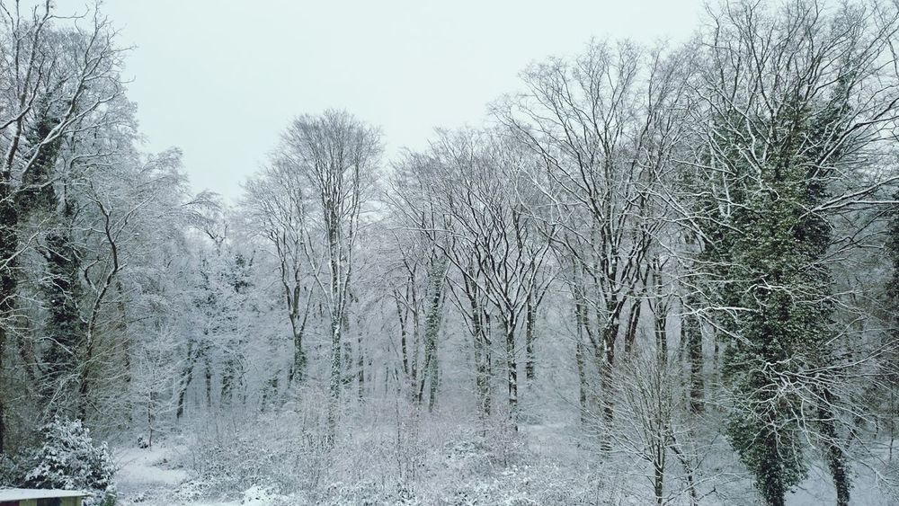 France Winter Snow White What Does Peace Look Like To You? Forest Traveling