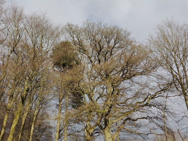 Bare trees in the Danish countryside - Winter Danish Bare Tree Countryside Danish Countryside Denmark Danmark Day Outdoors No People Nature Backgrounds Growth Close-up Tree Sky