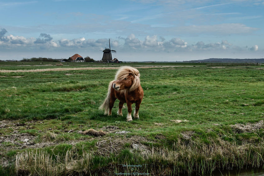 Happy Easter Day Dutch Countyside Easter Holandia Holland Landscape_Collection Nature Nature Nature On Your Doorstep Netherlands Netherlands Holland No People Outdoors Springtime