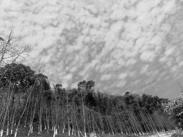 Black & White Blackandwhite Cloesup Cloud - Sky Clouds And Sky Growth On Foot Photography Sky Spring Sunshine Tree