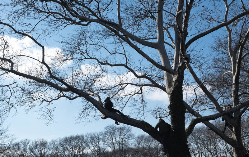 Tree Branch Nature Low Angle View Beauty In Nature Sky Outdoors Day Winter Streetphotography Philly Philadelphia Perspectives on Nature Shades of Winter EyeEmNewHere Climbing