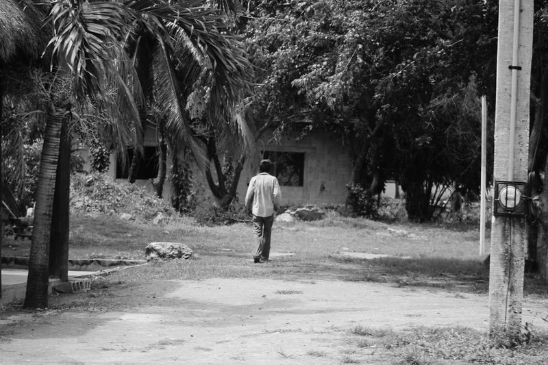 Rear view of man walking along palm trees