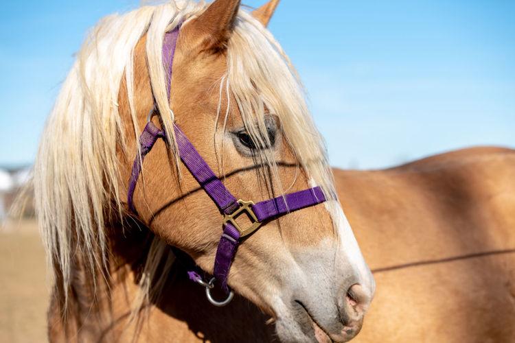 horse Portrait Sand Close-up Sky Sand Dune Horse Stable Paddock Pony Horseback Riding