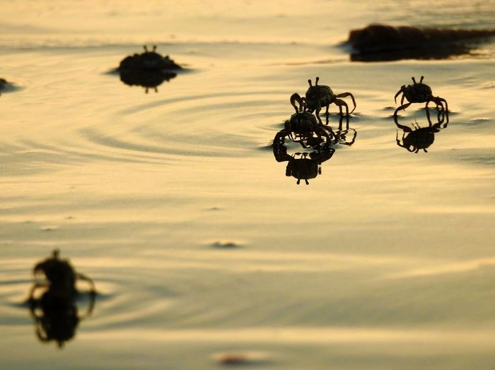 Silhouette crabs on beach
