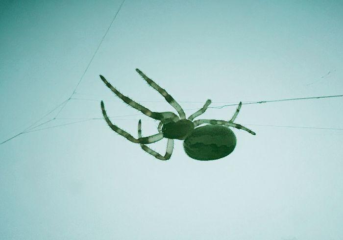 Spider, striped, outdoors, arachnid, Spider Web Close-up