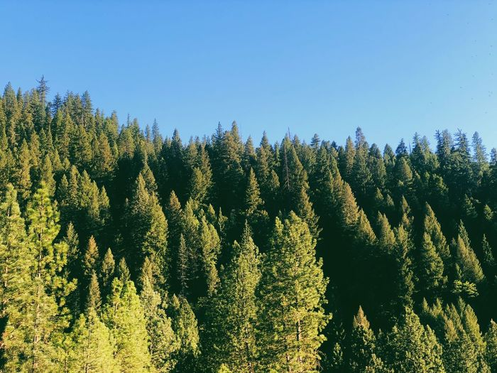 Panoramic view of trees in forest against clear sky