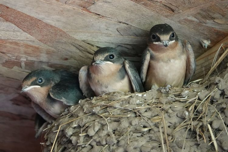 Close-up of birds in nest