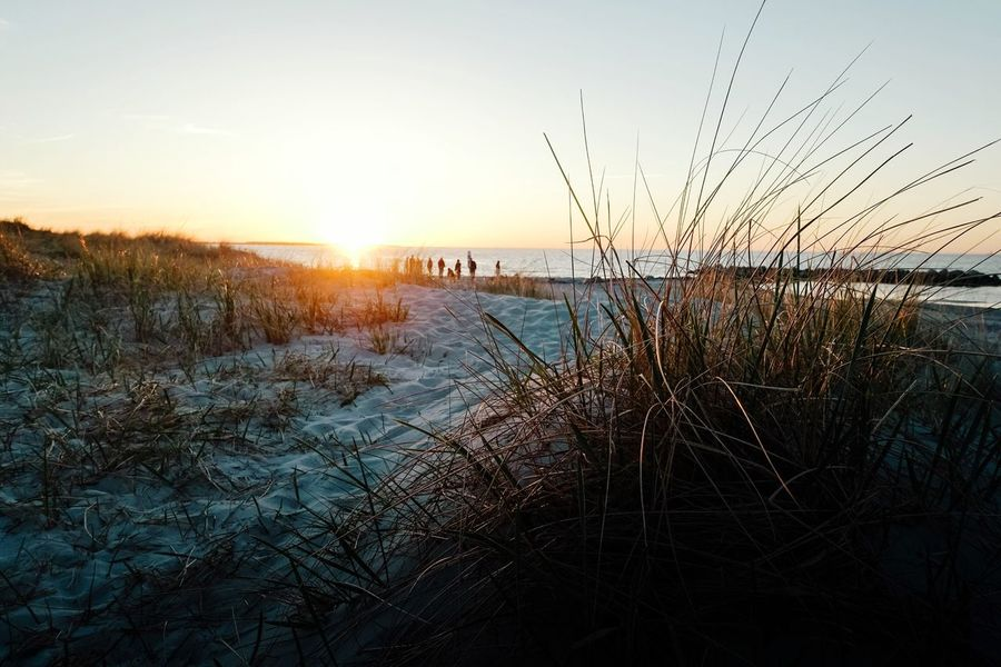 sun downer... Baltic Sea Ostseestrand Beach Sky Sunset Nature Plant Beauty In Nature Water Sun Scenics - Nature Sunlight Tranquility Tranquil Scene