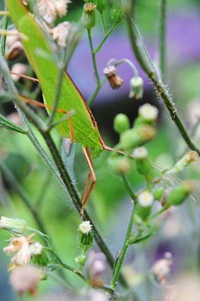 From summer to autumn Macro Nature EyeEm Best Shots - Nature EyeEm Nature Lover EyeEm Gallery