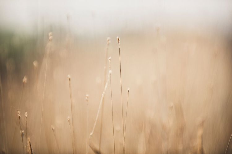 grass flower background Nature Wallpaper Grass Soft Nature Tranquility No People Growth Plant Beauty In Nature Day Close-up Field Backgrounds Focus On Foreground