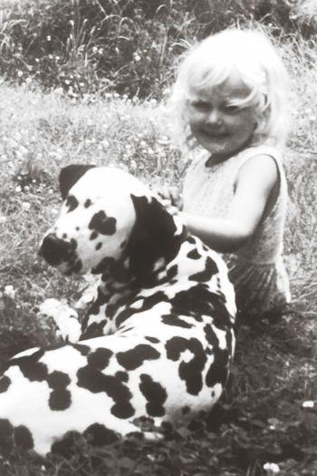 Me Vintage Dogs Dalmatian
