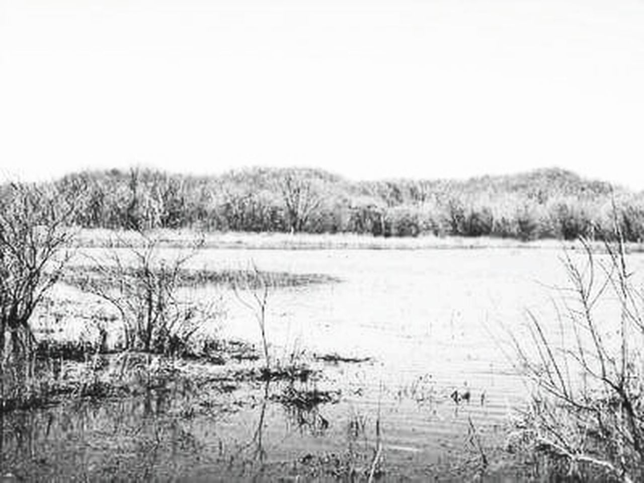 nature, water, lake, grass, outdoors, tranquility, tranquil scene, marsh, landscape, no people, day, scenics, timothy grass, beauty in nature, winter, sky
