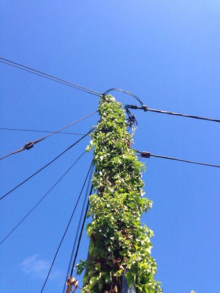 Nature Sky Plant Electricity