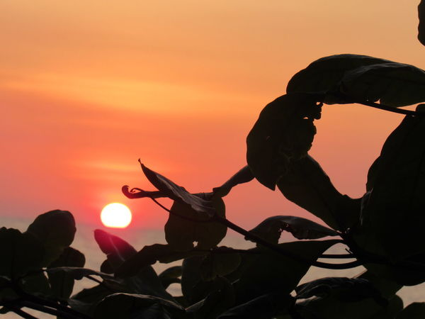 Traveling Home For The Holidays Sunsets Sunsetsilhouettes Sunsets_oftheworld Sunsetphotographs Sunsets Of Eyeem Sunsets_capture Sunsetsea Sunsetsniper_twilight Sunsetsofinstagram