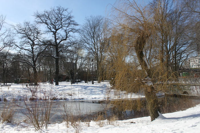 Tiergarten in winter II Winter In Berlin Bare Tree Beauty In Nature Branch Cold Cold Temperature Day Frozen Ice Landscape Nature No People Outdoors Scenics Sky Snow Snowing Tranquil Scene Tranquility Tree Water Weather White Color Winter Winter In Berlin Park Shades Of Winter