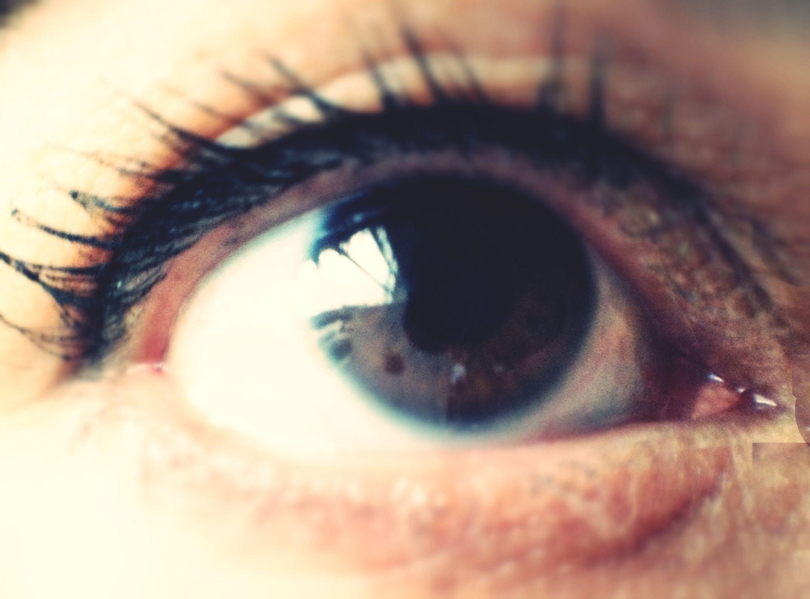 human eye, eyelash, eyesight, close-up, sensory perception, part of, extreme close-up, human skin, eyeball, looking at camera, iris - eye, portrait, human face, extreme close up, indoors, eyebrow, lifestyles