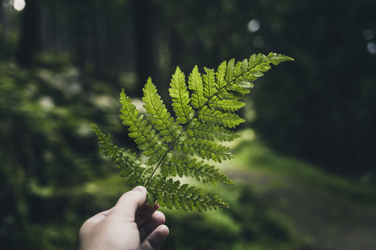 Close-up of hand holding fern