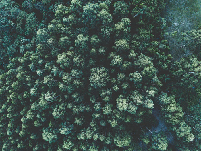DJI Mavic Pro Drone  Backgrounds Beauty In Nature Coral Day Dji Ecosystem  Freshness Full Frame Green Color Growth Land Marine Nature No People Outdoors Pattern Plant Sea Tranquility Tree UnderSea Underwater