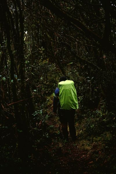 a man with backpacks lost on the stranger mossy forest Backpack Hikingadventures Beauty In Nature Nature_collection Outdoor Photography Nature Photography EyeEm Selects Hiking Trail Hikingadventures Hiking Hiking Photography Full Length Tree Water Forest Men Rear View Walking Green Color Hiker RainDrop Pine Tree Hiking Hiking Pole Rain Rainy Season