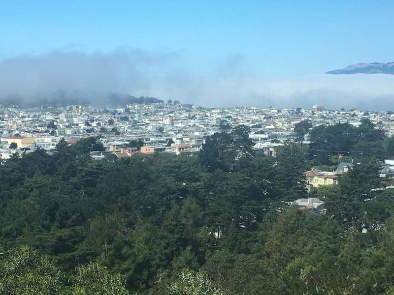 Fog On San Francisco Architecture Cityscape Built Structure Building Exterior City Crowded Tree Residential Building Residential Structure Sky Residential District Blue Growth Outdoors Aerial View City Life Scenics No People Green Color Mountain