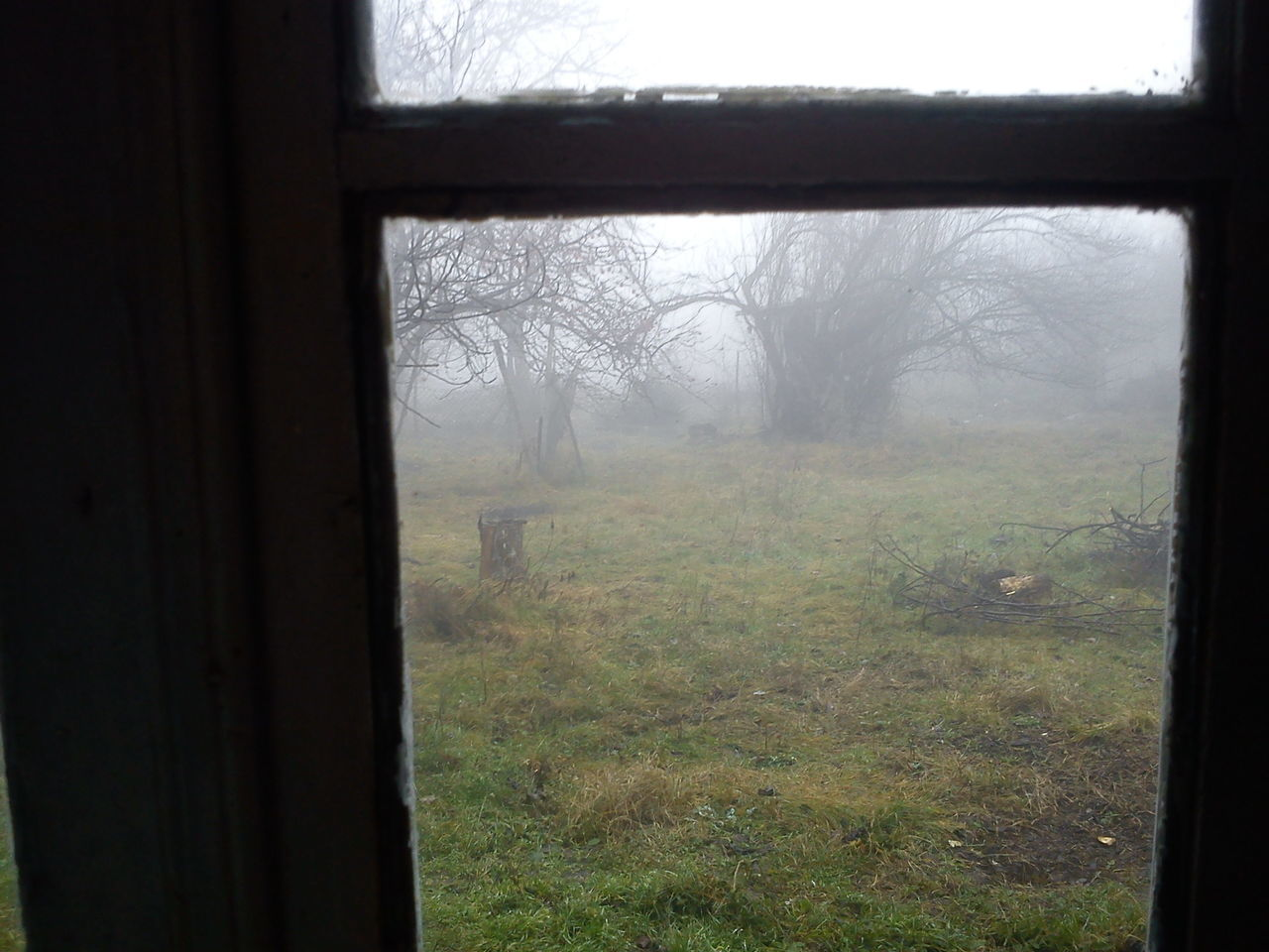 window, tree, day, nature, landscape, no people, fog, indoors, beauty in nature, sky