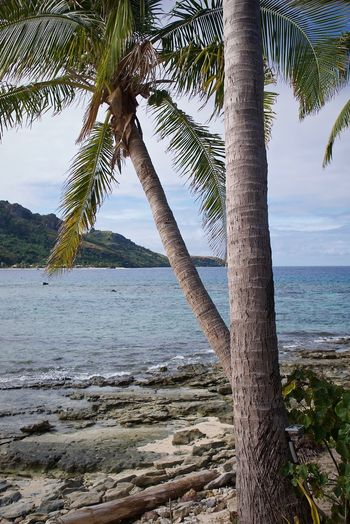 Leica Fiji Fiji Islands Water Palm Tree Tree Trunk Beauty In Nature Tropical Climate Beach Scenics - Nature Nature Tranquil Scene No People Coconut Palm Tree Palm Leaf Tropical Tree Outdoors Tranquility