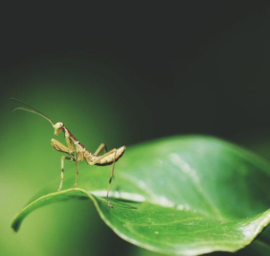 Macro shot of praying mantis on leaf
