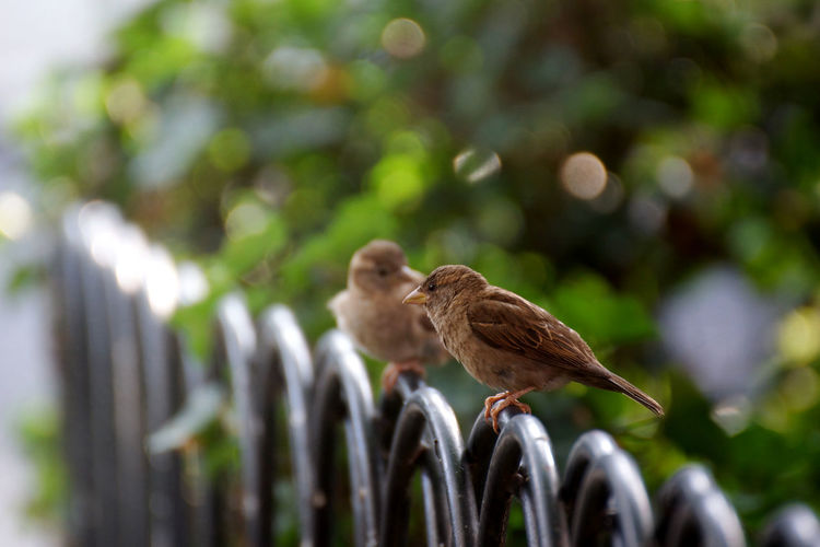 Low angle view of bird perching outdoors