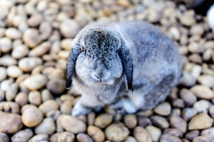 Day Close-up Pebble No People Social Issues Outdoors Nature Focus On Foreground Animal Themes Rabbits 🐇 Rabbit Rabbit - Animal Indoors  Pets Nature Animal