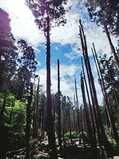Nantou,Taiwan 忘憂森林 Nature Growth Plant Tree Sky No People Outdoors Landscape Day Beauty In Nature