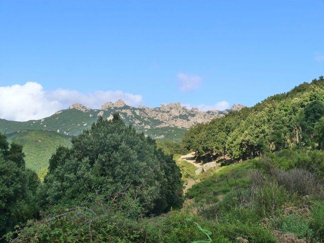 Sardinia Sardegna Italy  Sardinia Sardegna Tree Mountain Rural Scene Sky Green Color Plant Landscape