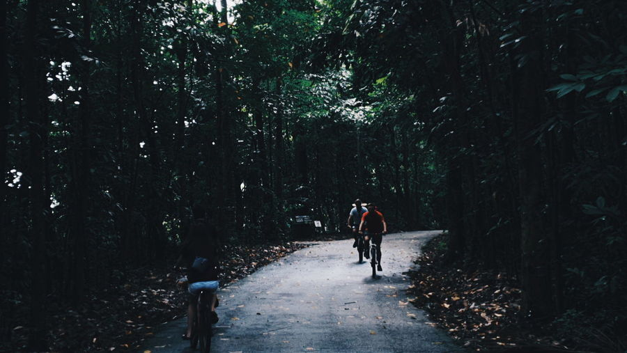 Rear view of man riding bicycle on forest