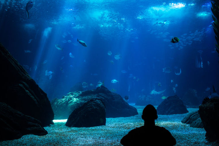 Watching the life under the sea, in the aquarium of Lisbon Lisbon Aquarium Fish Travel Tourism Watch UnderSea Sea Life Scuba Diving Water Underwater Swimming Sea Aquarium Silhouette