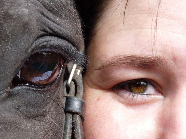 Eyes Horse And Rider Lovely Looking At Camera Quiet Moments