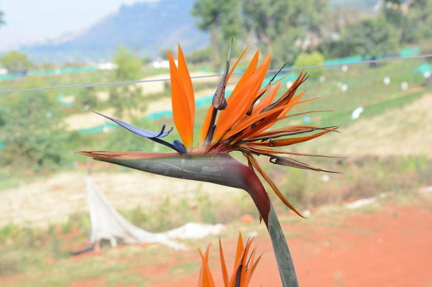 Flower INI Photo Photography