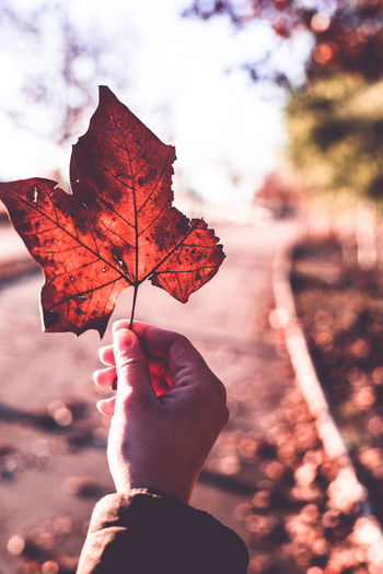 Cropped Hand Holding Maple Leaf On Road During Autumn