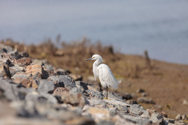 Side View Of Egret On Rocks