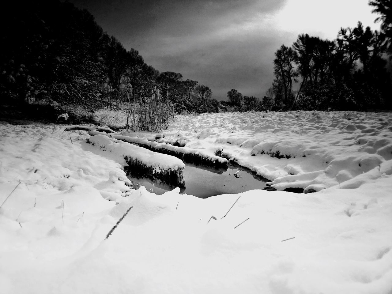 snow, cold temperature, winter, nature, weather, tree, tranquility, landscape, scenics, tranquil scene, no people, outdoors, beauty in nature, sky, cloud - sky, day