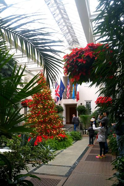 Tree Growth Red Flower Plant Nature Men Day Christmas People Christmas Tree Adult Outdoors Greenhouse Celebrations Decorations Garden Travel Sparkling Surrounded By Nature Colorful Leaves Indoors  Flags