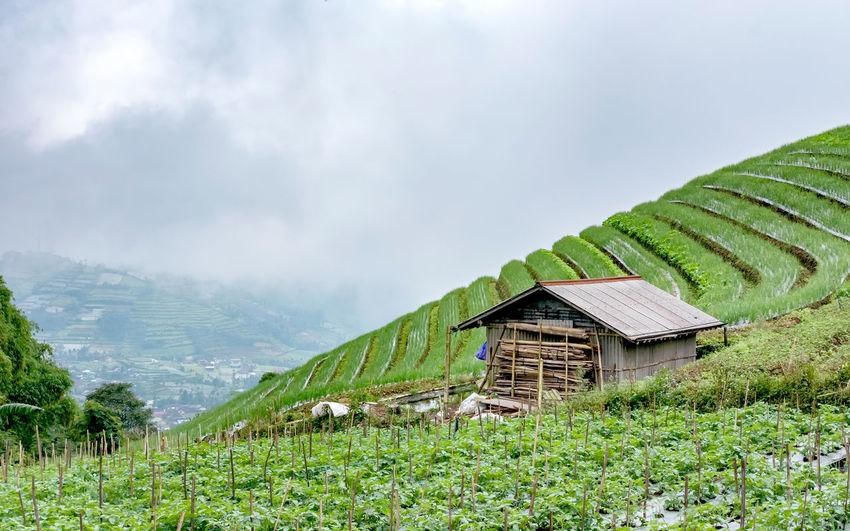Little hut in
