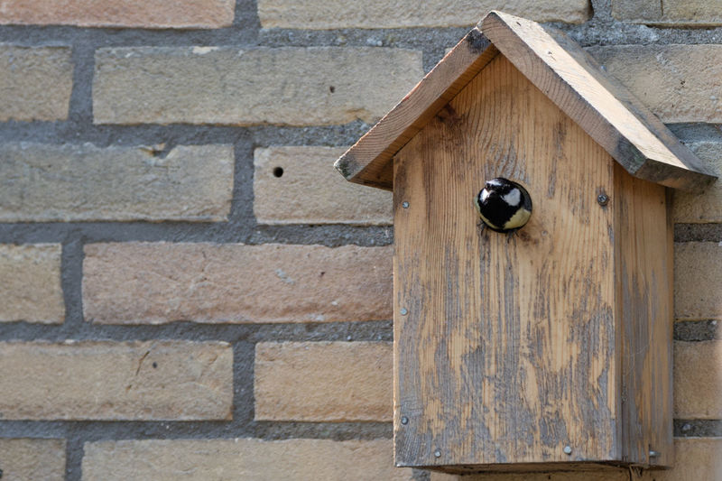 Bird in wooden house on wall