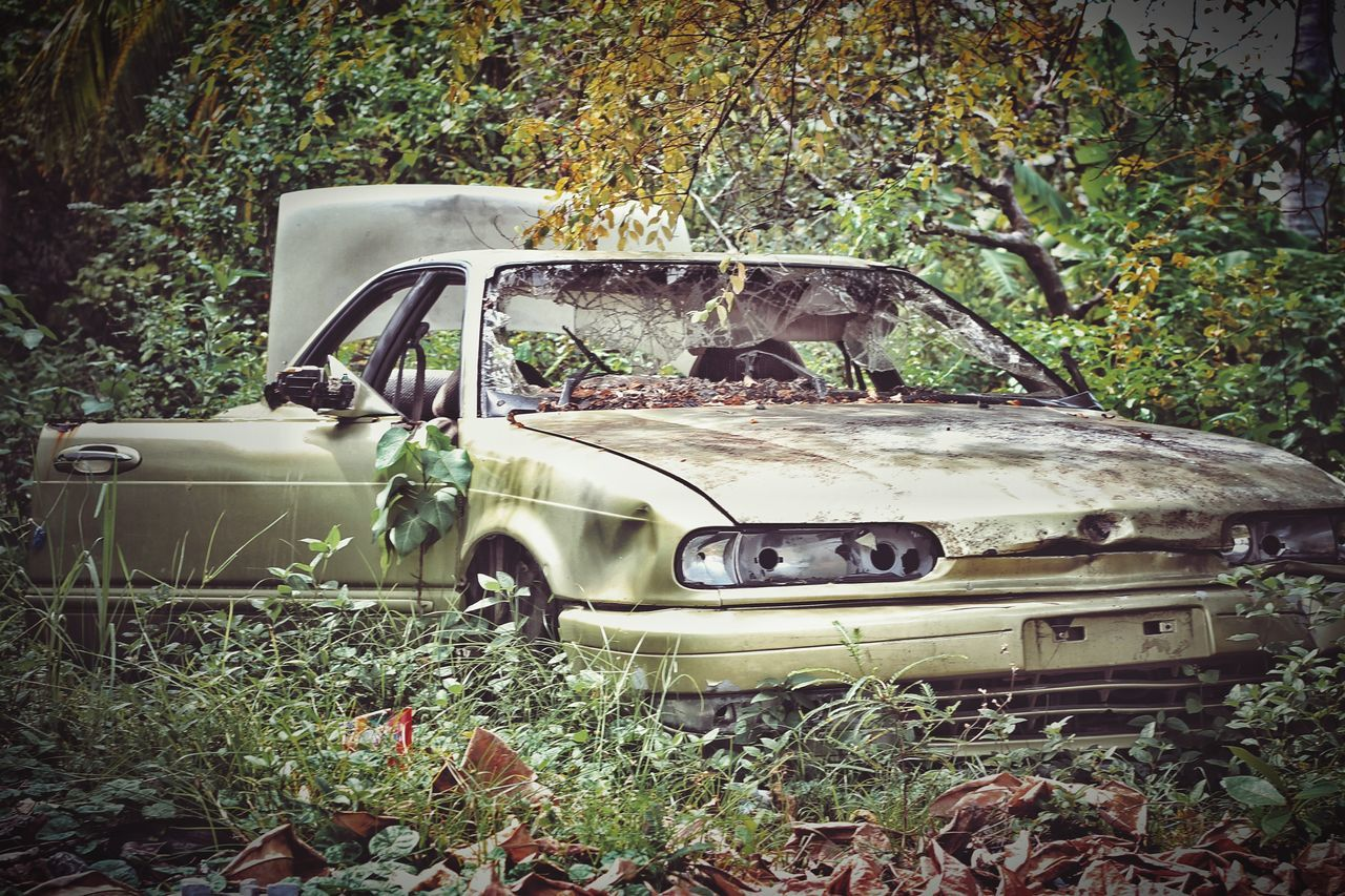 car, damaged, abandoned, obsolete, transportation, tree, no people, day, land vehicle, plant, bad condition, outdoors, leaf, nature