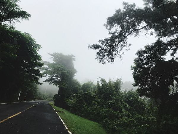 Tree Road Nature Transportation The Way Forward No People Street Day Outdoors Landscape Growth Fog Sky Beauty In Nature Scenics