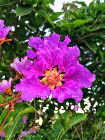 Purple Flower Beauty In Nature Nature Petal No People Fragility Growth Blooming Flower Head Freshness