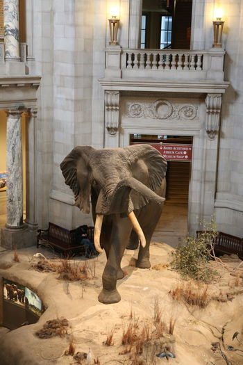 Low angle view of elephant standing against building