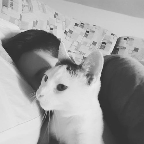 guardion angel EyeEm Best Shots Sleep Cat Kitten Mycat Lovecat  Love My Cat Black And White Bed Inthebed Bedtime Pillow Pets Domestic Animals One Animal Mammal Animal Themes Domestic Cat Portrait Indoors  Cute