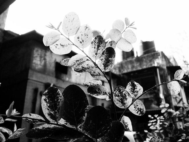 Showcase March Blackandwhite Nature Everyday Lives Littlethingsinlife Spring ABeautifulWorld Springcollection Plants