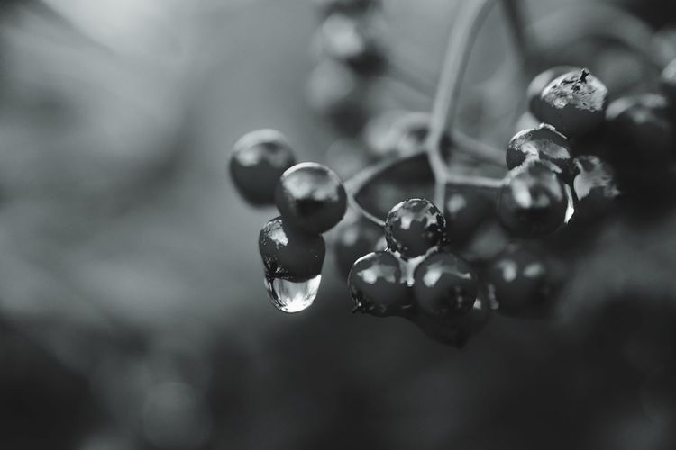EyeEm Best Shots - Nature EyeEm Best Shots - Black + White Focus On Foreground Growth Nature Close-up No People Beauty In Nature Plant Fruit Drop Day Freshness Outdoors